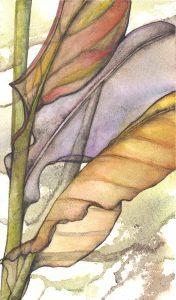 Leaf Medley  (l)