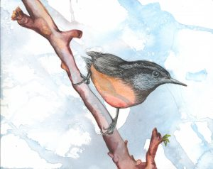 Day in the Life of the Red-breasted Nuthatch