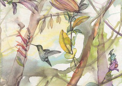 Secret Life of Hummingbirds